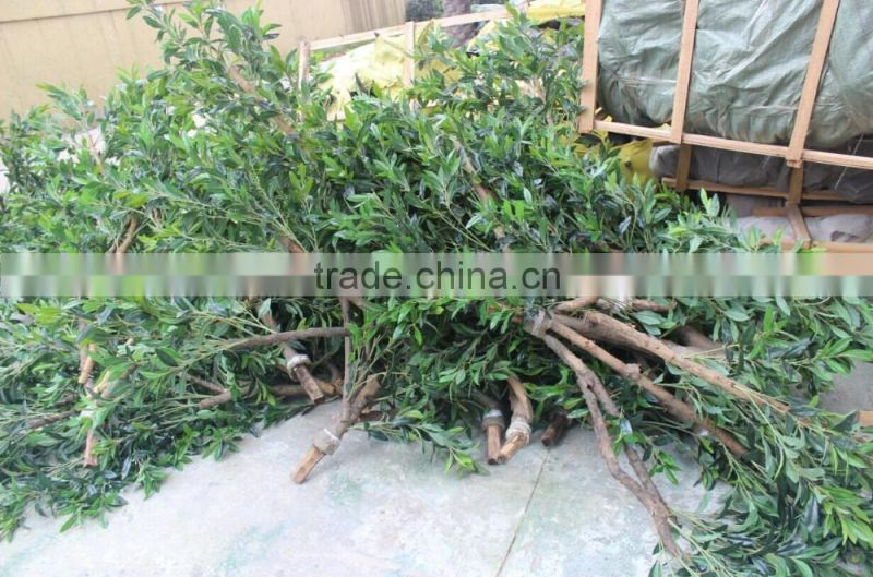 Artificial olive tree , large fake olive tree for sale
