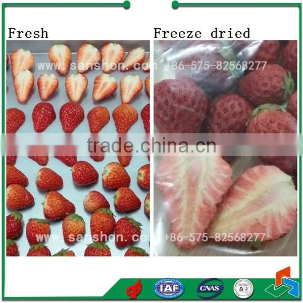 China Banana Apple Orange Pear Lab Freeze Dryer Machine