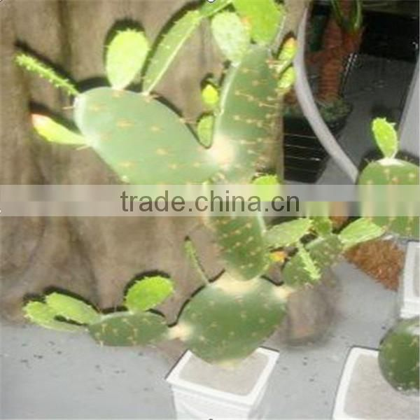 SJM091022 Guangzhou wholesale decoration artificial Cactus P.E Hoodia gordonii