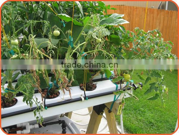 Hydroponics System for Greenhouse