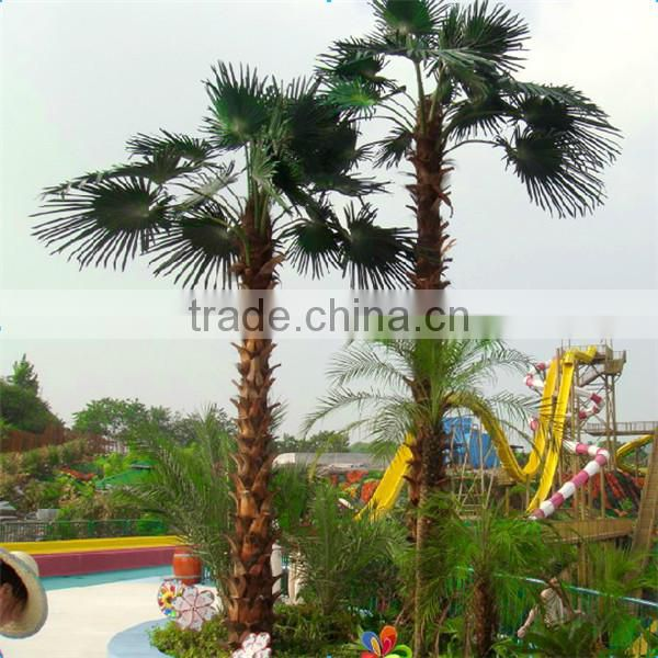 garden outdoor uv-protected date palm tree canary date palm tree
