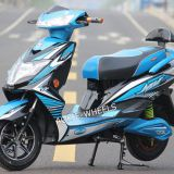 High Quality 1000W Electric Racing Motorcycle with Disk Brake