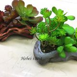 Sell Mini Imitation Stone Potted Artifical Succulents Plant