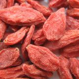 Free Pesticides Goji Berry