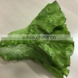 artificial romaine lettuce cos lachca sativa E09 02