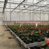 hot sale galvanized commercial hybrid greenhouse                                                                         Quality Choice