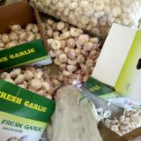 5-5.5cm Fresh Normal White Garlic In 5kg Carton Box Packing