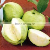 GUAVA <b>FLAVOR</b> FOR <b>FRAGRANCE</b>S