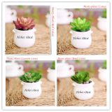 Sell Mini Artifical Succulents Plant in Round Pot