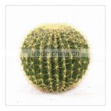 SJM091038 Good quality 100% natural hoodia decoration artificial cactus P.E.