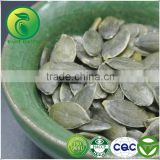 Edible GWS Pumpkin Seeds high quality best price 2015 china inner mongolia