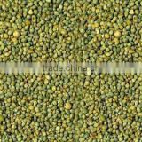 Superior Quality Green Millet