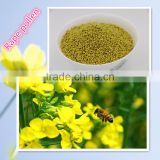 natural pure rape bee pollen/rape pollen/rape flower pollen from Qinghai Province in China