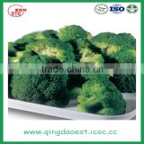 high quality fresh broccoli for sale 1000-1100g/pc