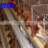 hot sale automatic livestock drinkers for chicken and poultry automatic chicken feeding line