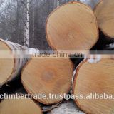 Birch logs, veneer and furniture grade, AB Quality