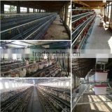 Galvanzied Welded Chicken Cage Wire Mesh/Galvanized Chicken Cage Wire Mesh/Galvanzied Chicken Layer Cage Wire Mesh