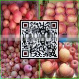China's shandong province, one of the best red Fuji apple/fresh apple, exported to Europe and the United States, southeast Asia