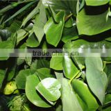 stickers home garden deco 200*200 cm indoor or outdoor artificial corner succulent green climbing plant wall Ezwq10 108