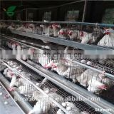 galvanized welded wire high quality poultry chicken cage for sale 3 tier 120 birds layer chicken cage