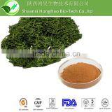 Herbal Heanlth Product Organic 95%Polyphenols 45%EGCG Matcha Green Tea Powder, Tea Polyphenols Matcha Green Tea Powder