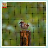 CROPS & GARDEN - Plant and crops protection - Anti Bird Net