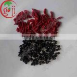 Dried Qinghai organic black goji berry/Black goji berries price