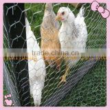 Chicken wire mesh cage (PVC COATED OR GALVANIZED)Manufacturer&Exporter-OVER 20 YEARS