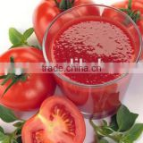 bulk tomato paste price high quality
