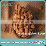 Quality Agricultural Apricot Seeds/ Apricot Kernels for Sale