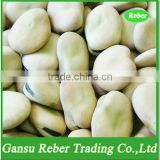 Broad/Fava Beans Qinghai or Gansu Origin