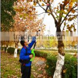 Professional grade Telescoping pole pruner