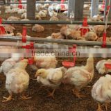 ^Agriculture equipment for poultry drinking/chicken egg poultry farm equipment/poultry nipple drinking system