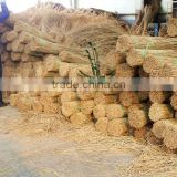 water reed thatching material