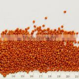 Best Quality Red Millet Bulk