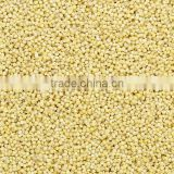 Superior Quality Yellow Millet