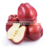 Red Delicious Apple Gansu huaniu apple