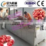 hot sale and high efficiency green plum pitting machine