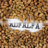 Best Quality Sprouting ALFALFA SEEDS