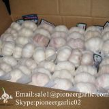 New Crop Fresh Jinxiang Normal White Garlic 5cm And Up In Carton Box Packing