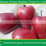 Red Delicious Apple Gansu huaniu apple from China
