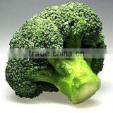 Chinese Fresh Green Broccoli