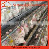 Automatic chicken egg layer cages poultry cage poultry layer farming equipment for Zambia farm