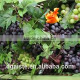 artificial plastic grape fruit products simulated grape