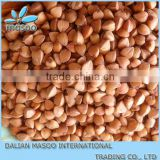 buckwheat, Chinese Inner Mongolia bulk Roasted Buckwheat stock reasonable price