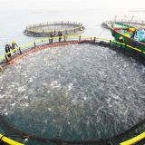 Floating Cage Fish Culture Floating Fish Cage Wind And Wave Resistance