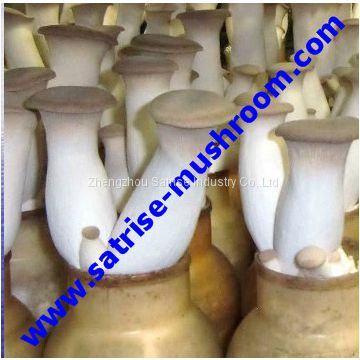 Best selling affordable fair mushroom bottle for autoclave