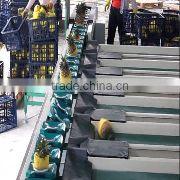 Fruits Shaddock Grading Machine Sorter Grader Separator Weight Sorting Machine