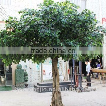 artificial Polyscias trees PE leaves fake tree for sale