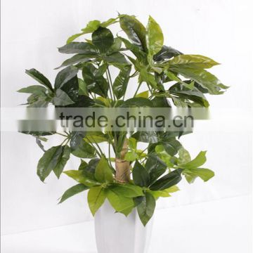 Decoration bonsai lucky tree at low price